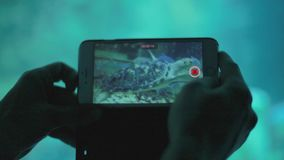 La fine delle mani del ` s dell'uomo prende il video della tartaruga tramite telefono cellulare in Oceanarium ed in zoo subacqueo video d archivio