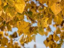 la fine di autunno va in su Fotografie Stock Libere da Diritti