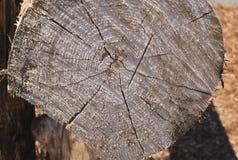 La fine di legno di conclusione del ceppo sull'età concentrica circonda Fotografie Stock Libere da Diritti