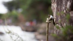 La fine di modo di strada della pioggia dell'acqua di gocce dell'erba sulla corda oscilla il guiderope Fotografia Stock Libera da Diritti