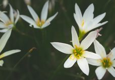 La fine su dei fiori bianchi royalty illustrazione gratis