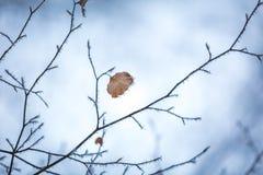La fine su del faggio lascia con hoarfost nella foresta dell'inverno Immagine Stock Libera da Diritti