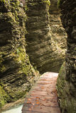 la fine su sulla via di legno con i morti lascia in canyon naturale 188 Fotografia Stock Libera da Diritti