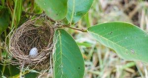La fine sul colpo di un nido ha trovato su un albero nella foresta con un uovo in  immagine stock libera da diritti