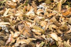 La fine sulle coperture del Durian è rifiuti ed è stata fatta per fare la bio--composta fotografie stock