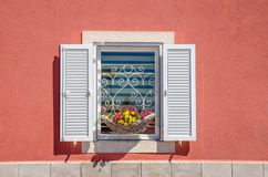 La finestra con gli otturatori bianchi e la bella fioritura fiorisce contro una parete rossa immagine stock libera da diritti