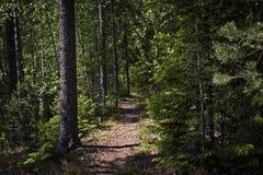 La Finlande : Chemin à travers la forêt Images stock