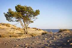 La Finlandia: Spiaggia di Yyteri Immagini Stock Libere da Diritti