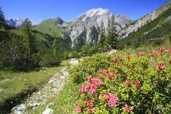 La fioritura è aumentato Fotografia Stock Libera da Diritti