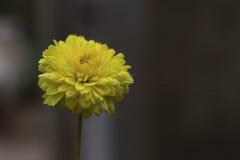La fioritura Fotografia Stock Libera da Diritti