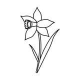 La fioritura della foglia del fiore del narciso assottiglia la linea illustrazione vettoriale