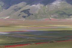 La fioritura di Castelluccio fotografie stock