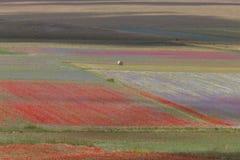 La fioritura di Castelluccio immagini stock