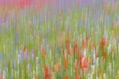 La fioritura di Castelluccio fotografia stock
