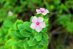La fleur Image libre de droits