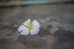 La fleur Images stock
