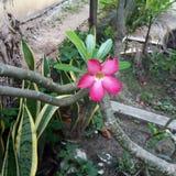 La fleur Photographie stock