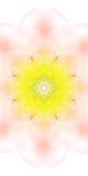 La fleur abstraite originale sur un fond blanc Photo libre de droits