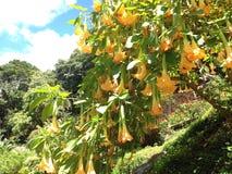 La fleur aiment une cloche jaune Photographie stock