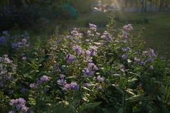 La fleur bleue juste éveillée images stock