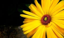 La fleur chaude image libre de droits