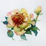La fleur colorée de fond d'art d'aquarelle s'est levée Photographie stock