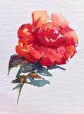 La fleur colorée de fond d'art d'aquarelle s'est levée Photo stock