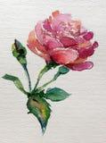 La fleur colorée de fond d'art d'aquarelle s'est levée Photographie stock libre de droits
