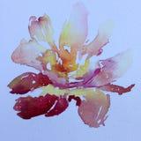 La fleur colorée de fond d'art d'aquarelle s'est levée Photos stock