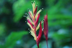 La fleur d'oiseau d'amour Photo libre de droits