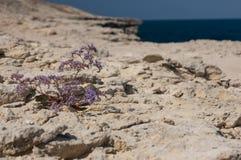 La fleur dans le désert en pierre images libres de droits