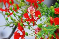 La fleur de flamme Photos stock