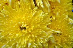 La fleur de la fleur images stock