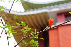 La fleur de grenade est très belle Dans les branches épaisses accrochant en une fleur avec du charme de plage Images libres de droits