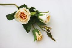 La fleur de pêche d'une rose se trouve sur une surface blanche Photos libres de droits