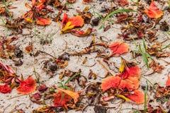 La fleur de paon Photographie stock libre de droits