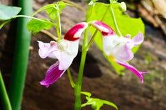 La fleur de perroquet photographie stock