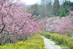 La fleur de prune Images libres de droits