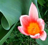 La fleur de référence part de l'orange d'herbe image libre de droits