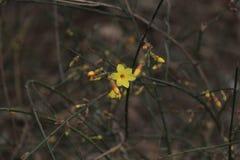 La fleur de rue du premier ressort dans Pékin Photographie stock libre de droits