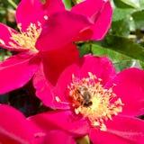 La fleur de thème Photos stock