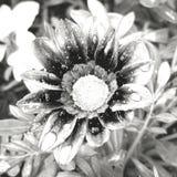 La fleur dedans peut verser photo stock