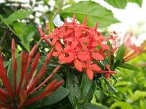 La fleur du bronzage Photographie stock libre de droits