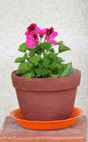 la fleur a effectué le rouge de bac de pâte à modeler Image stock