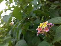 la fleur est un amour photos stock