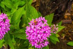 La fleur et l'abeille Photo libre de droits