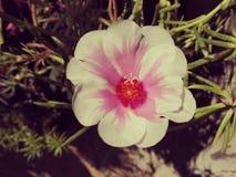 La fleur fabuleuse Photos libres de droits
