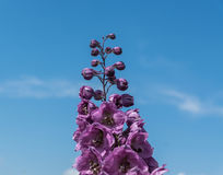 La fleur fleurit, de dessous, sous le ciel bleu, de petits nuages Photos stock
