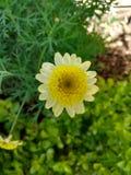 La fleur jaune aiment un nid d'abeilles Images libres de droits