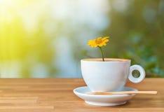 La fleur jaune dans une tasse de café sur la table en bois avec la lumière Photographie stock libre de droits
